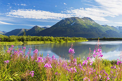 Scenic View Of Fireweed And Portage Art Print by Michael DeYoung