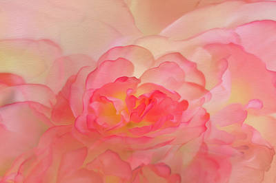 Photograph - Scented Dreams by Elvira Pinkhas