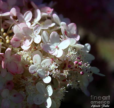 Photograph - Scented by Elfriede Fulda