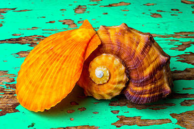Nature Study Photograph - Schallop Seashell And Snail Shell by Garry Gay