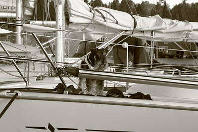 Schanuzer Dog On A Yacht - Monochrome Art Print by Ulrich Kunst And Bettina Scheidulin