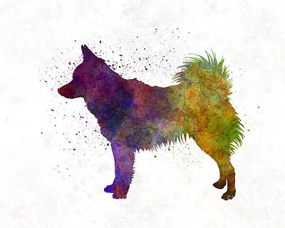 Spit Painting - Schipperke In Watercolor by Pablo Romero