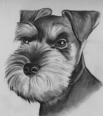 Drawing - Schnauzer by Barb Baker