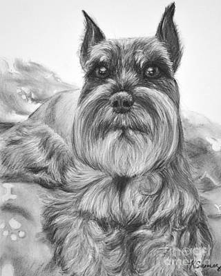 Schnauzer Drawing Bailey Art Print by Kate Sumners