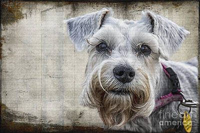 Digital Art - Schnauzer Fellow by Georgianne Giese