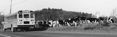 School Bus And Cows Art Print by Matt Plyler