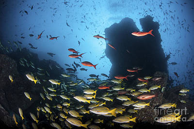 Animals Photos - Schooling Fish Swim Over A Rocky Reef by Ethan Daniels