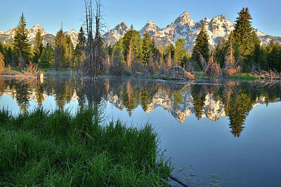 Photograph - Schwabacher Landing Reflection by Ray Mathis