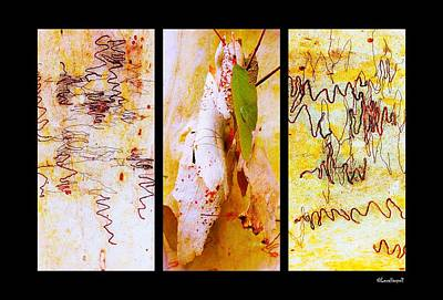 Photograph - Scibbly Gum Tree Bark Triptych by Lexa Harpell