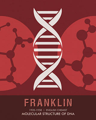 Molecular Structure Mixed Media - Science Posters - Rosalind Franklin - Chemist by Studio Grafiikka