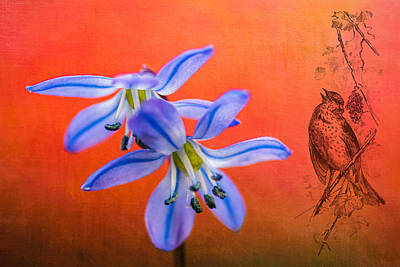 Wall Art - Photograph - Scilla Siberica by Michel Emery