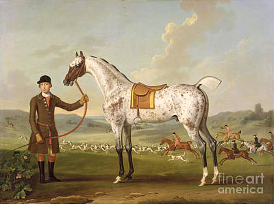 The Hunt Painting - Scipio - Colonel Roche's Spotted Hunter by Thomas Spencer