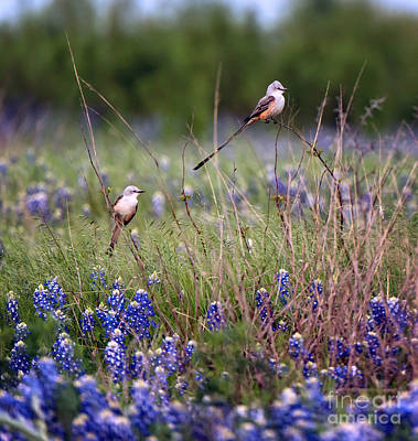 Photograph - Scissor-tailed Flycatchers by Cathy Alba
