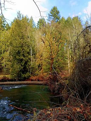 Photograph - Scoggins Creek 1 by Jerry Sodorff