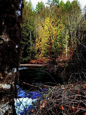 Photograph - Scoggins Creek 3 by Jerry Sodorff