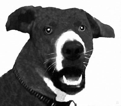 Black-and-white Digital Art - Scooby Doo - My Puppy Son by Katrina Britt