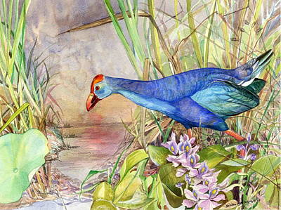 Sri Lankan Artist Painting - Scooting Coot - Purple Swamphen by Sasitha Weerasinghe