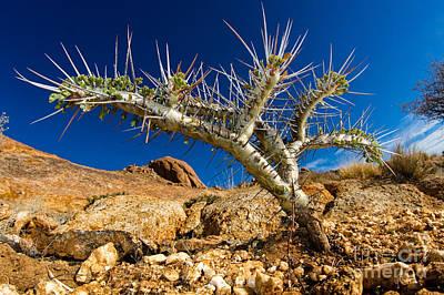 Photograph - Scorpion Plant by Francesco Tomasinelli