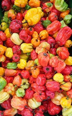 Photograph - Scotch Bonnet Peppers by Mudiama Kammoh