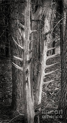 Photograph - Scotopic Vision 4 - Trees by Pete Hellmann