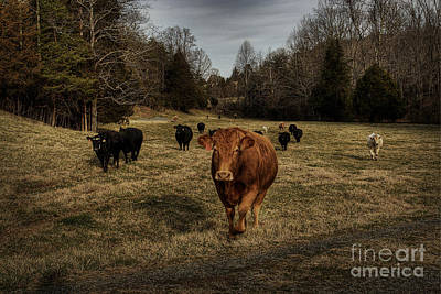 Scotopic Vision 9 - Cows Come Home Art Print by Pete Hellmann