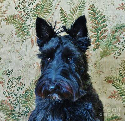 Photograph - Scottie by Michele Penner
