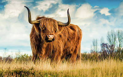 Bison Photograph - Scottish Bull On A Hill - Beautiful Animals In Nature by Wall Art Prints