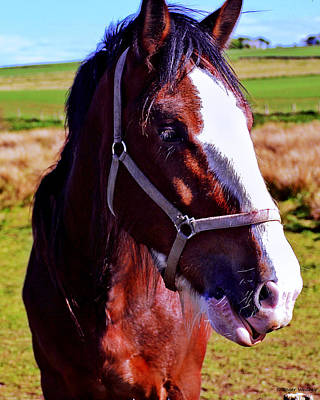 Scottish Clydesdale  Art Print by Roger Wedegis