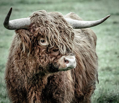Photograph - Scottish Highland Bull by Athena Mckinzie