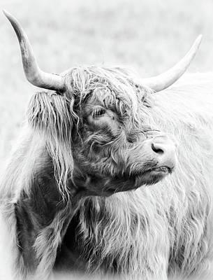 Photograph - Scottish Highland Cow Bw 1 by Athena Mckinzie