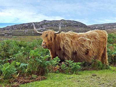 Scottish Highland Cow Art Print