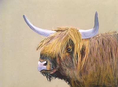 Pastel - Scottish Highland by Michele Turney