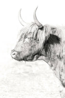 Photograph - Scottish Highland Profile by Wes and Dotty Weber