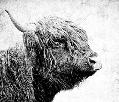 Photograph - Scottish Highlander Cow by Athena Mckinzie