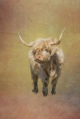 Photograph - Scottish Highlander by Tom Singleton