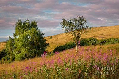 Photograph - Scottish Hillside by Brian Jannsen