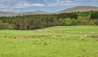Photograph - Scottish Landscape In Spring by Jeremy Lavender Photography