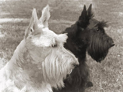 Scottish Dog Photograph - Scottish Terrier Dogs In Sepia by Jennie Marie Schell