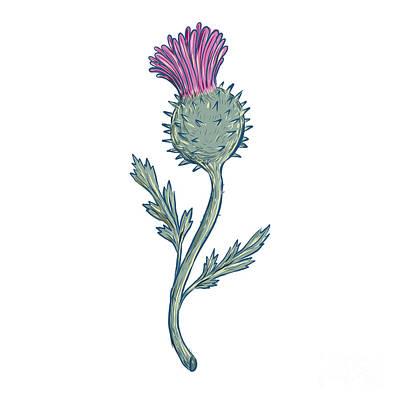 Flowering Plants Digital Art - Scottish Thistle Drawing by Aloysius Patrimonio
