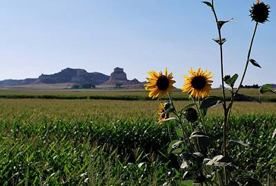 Photograph - Scotts Bluff Nebraska Sunflower Landscape View by Matt Harang