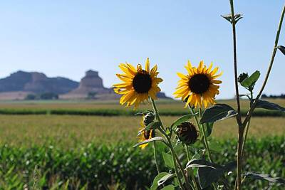 Photograph - Scotts Bluff Nebraska Sunflower View by Matt Harang
