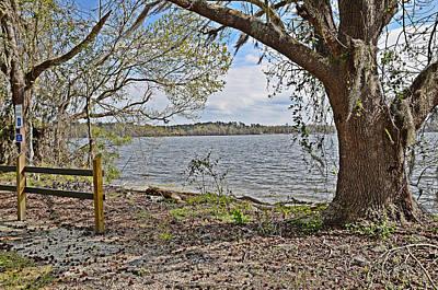 Photograph - Scotts Lake Spring by Linda Brown