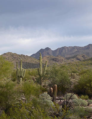 Apache Creek Photograph - Scottsdale Skyline by Gordon Beck