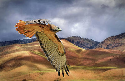 Red Tail Hawks Photograph - Scouting The Foothills by Donna Kennedy