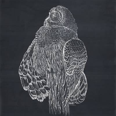 Mixed Media - Scratch Board Owl by Darren Cannell