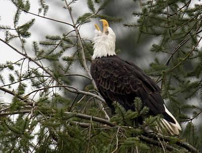 Photograph - Screamin Eagle by Randy Hall