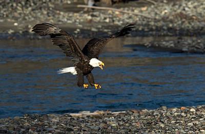 Photograph - Screaming Eagle II by Shari Sommerfeld