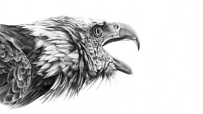Drawing - Screaming Eagle by Peter Williams