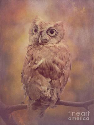 Photograph - Screech Owl 3 by Chris Scroggins