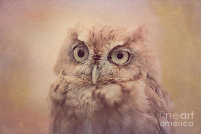 Photograph - Screech Owl 4 by Chris Scroggins